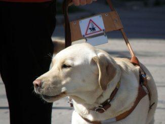 כלב נחייה. צילום אילוסטרציה: smerikal, ויקיפדיה