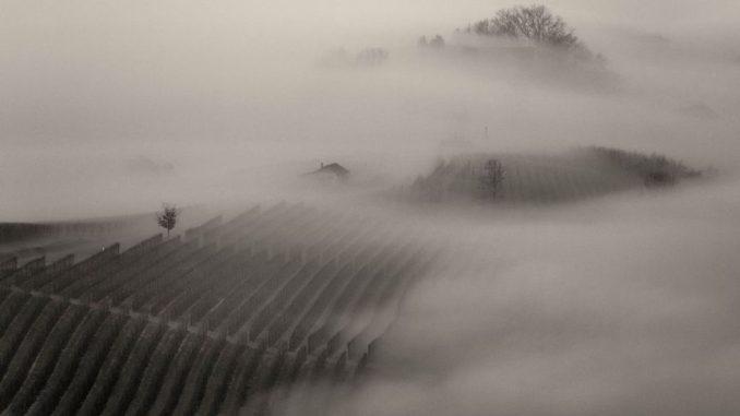 הכרמים באזור אלבה, צפון איטליה. צילום: Fulvio Spada ויקימדיה
