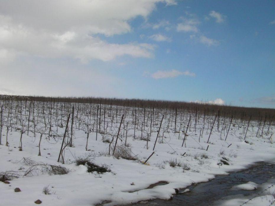 כרמי היקב בחורף. צילום: אתר היקב