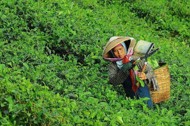 חזור לתהליכים שהחלו כבר לפני מאה שנה, אל החקלאות האורגנית